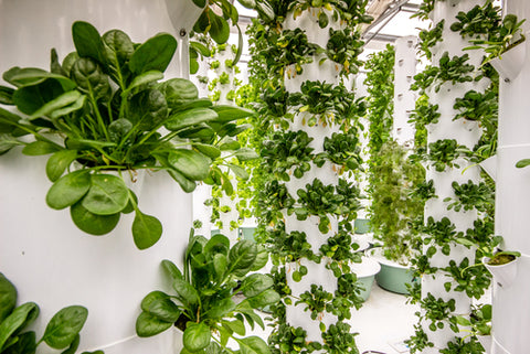 6 Types Of Hydroponic Systems And How To Choose The Right One aeroponic system