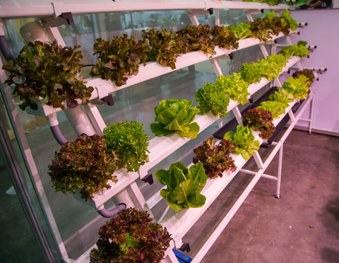 7 Reasons To Grow Produce At Home hydroponic home garden
