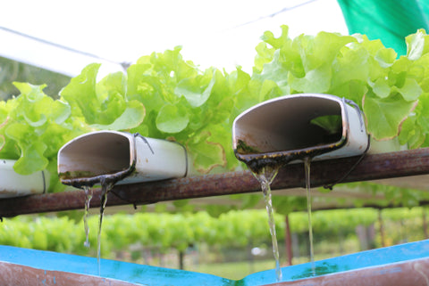 Everything You Need To Know About Water Testing hydroponic garden system with water dripping