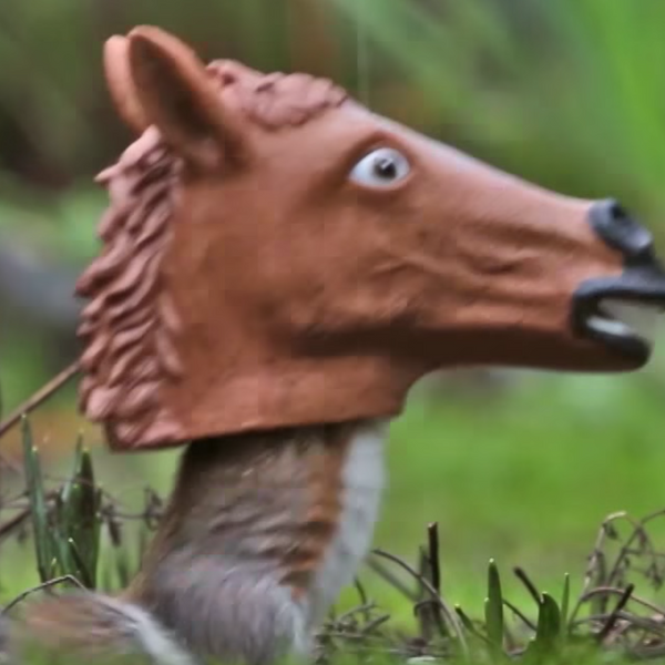 Horse Head Squirrel Feeder Video - Squirrel Goes Nuts