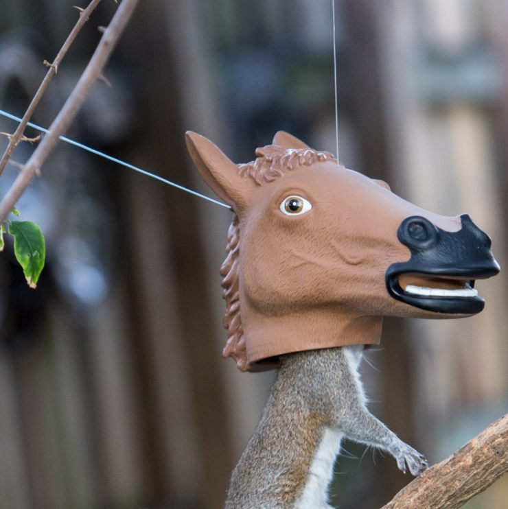 Why would someone invent a squirrel feeder shaped like a horse's head? Washington Post article