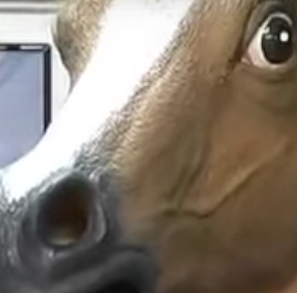 Where did the Horse Mask fad start?