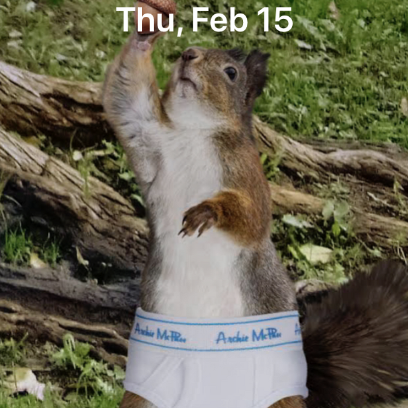 Free Squirrel In Underpants iPhone wallpaper!