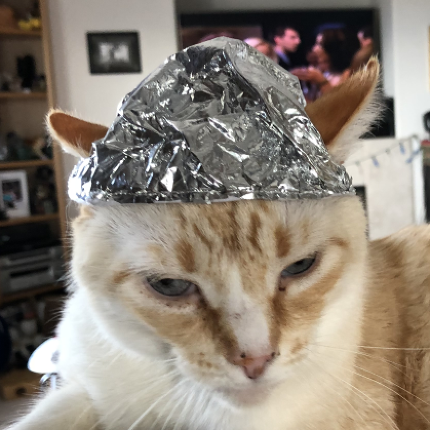 Pictures of Tin Foil Hat for Cats (And Humans) – Archie McPhee