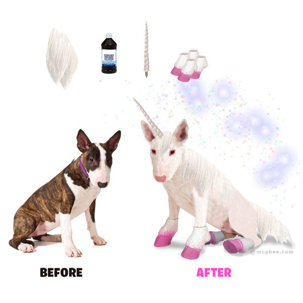 DOG TO UNICORN TRANSFORMATION KIT