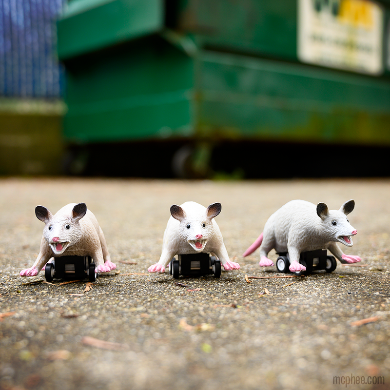 Racing Possums - Set of 3