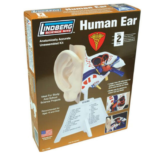 Human Ear Model Kit - Archie McPhee