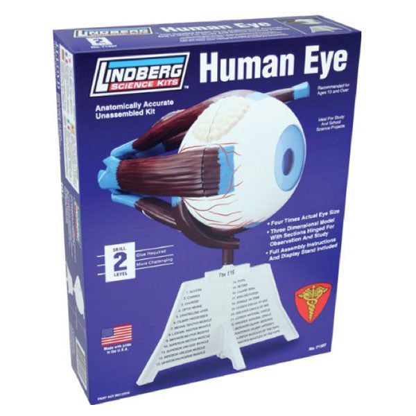 Human Eye Model Kit - Archie McPhee