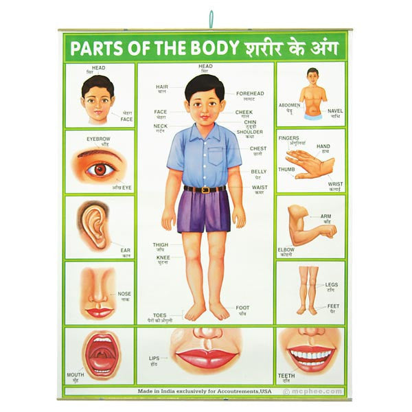 Home » All Products » Parts of the Body Indian Poster