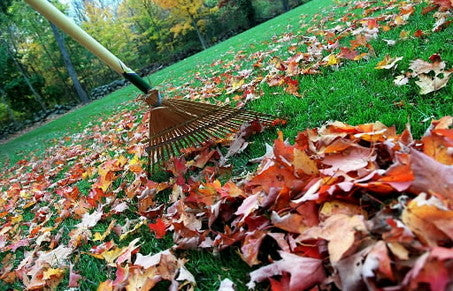 raking up fall leaves around the fire pit