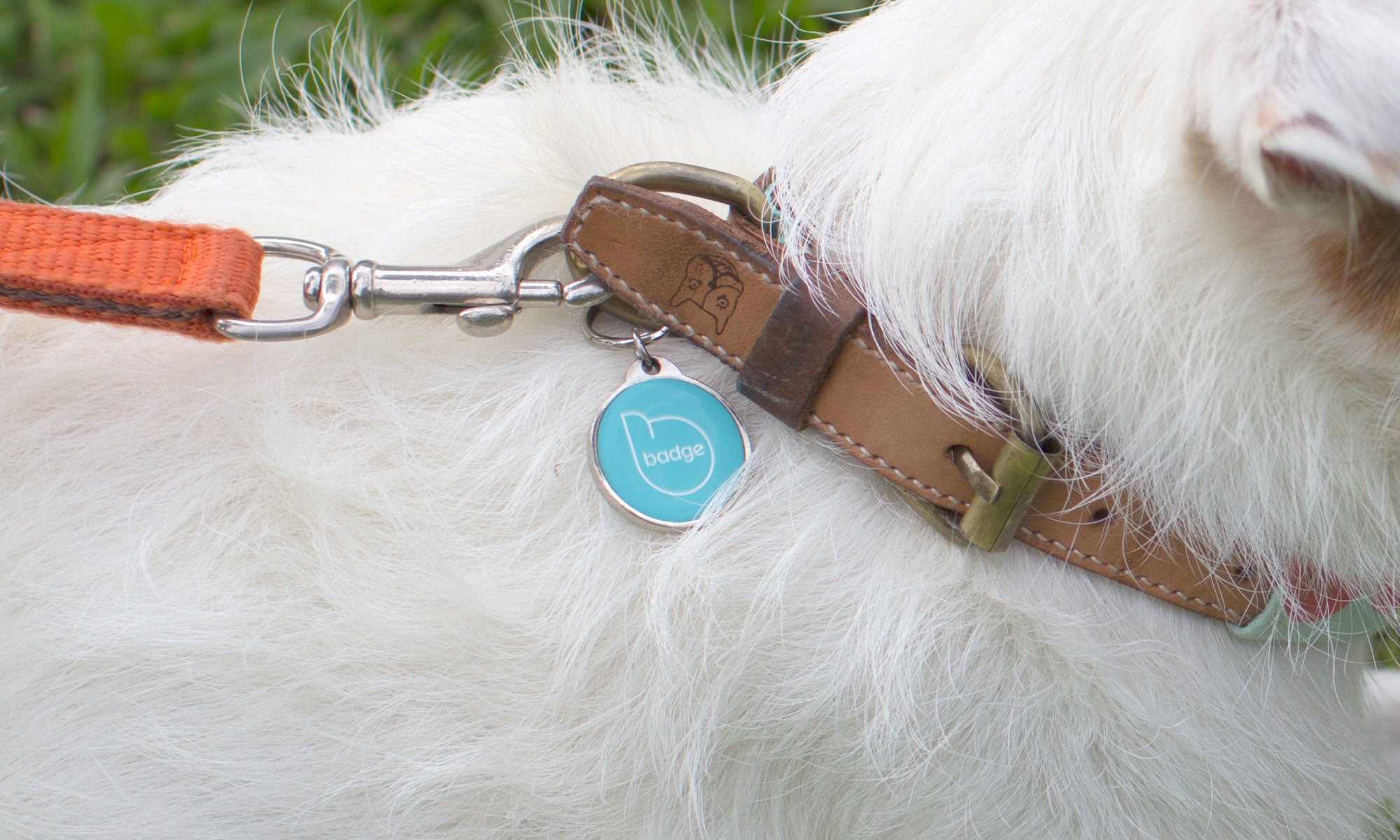 Intelligent Pet ID Tag - Cyan