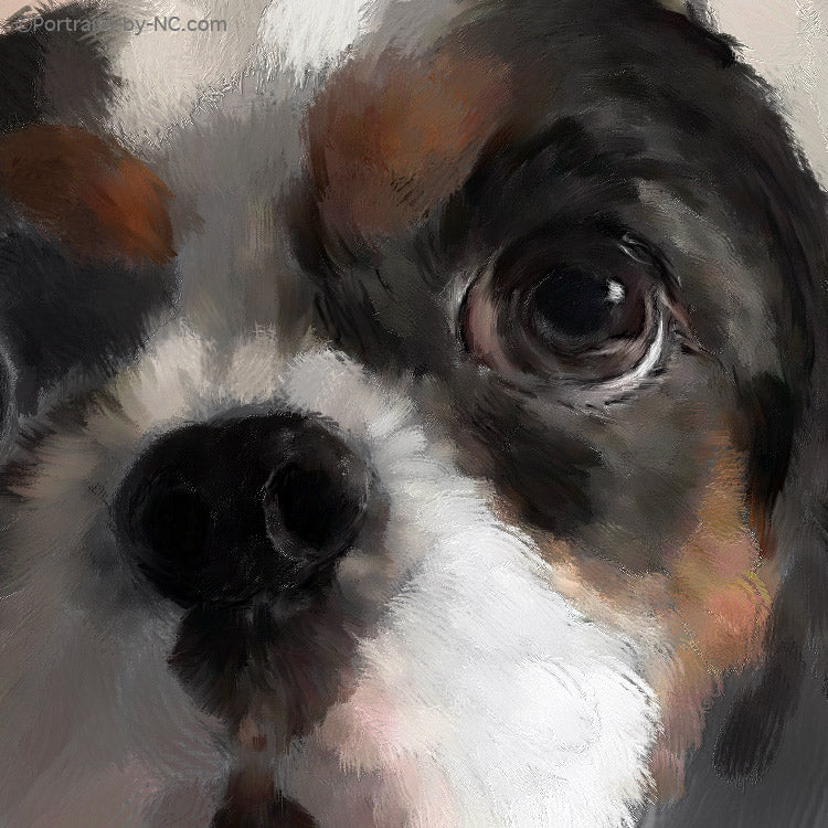 Portrait of a Dark Brown and White King Charles Spaniel  669