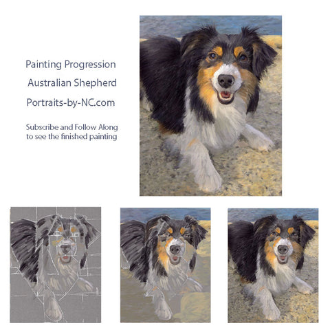 Australian Shepherd Portrait in Progress