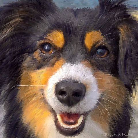 Custom Portrait of a Australian Shepherd Nr. 713