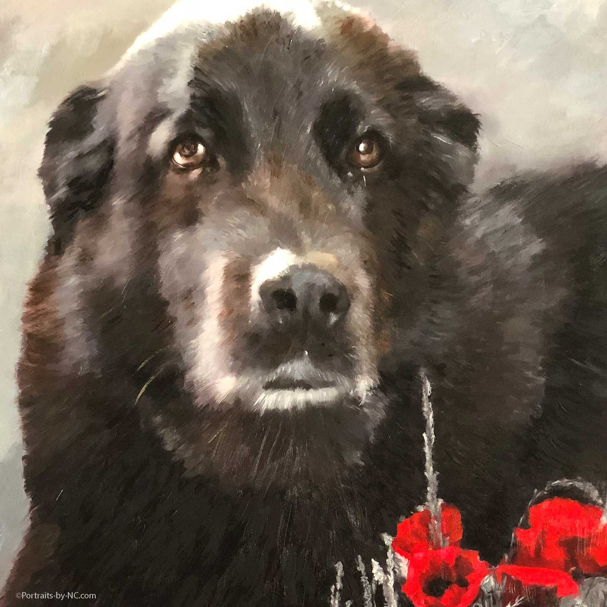Pet Portrait of a Dog in a Poppy Field