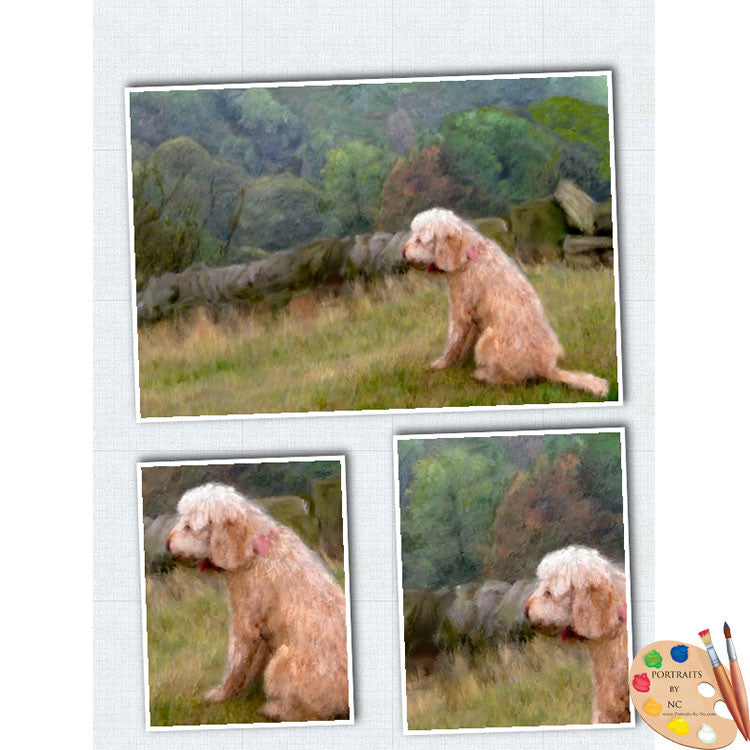 Labradoodle in Field Progress 3