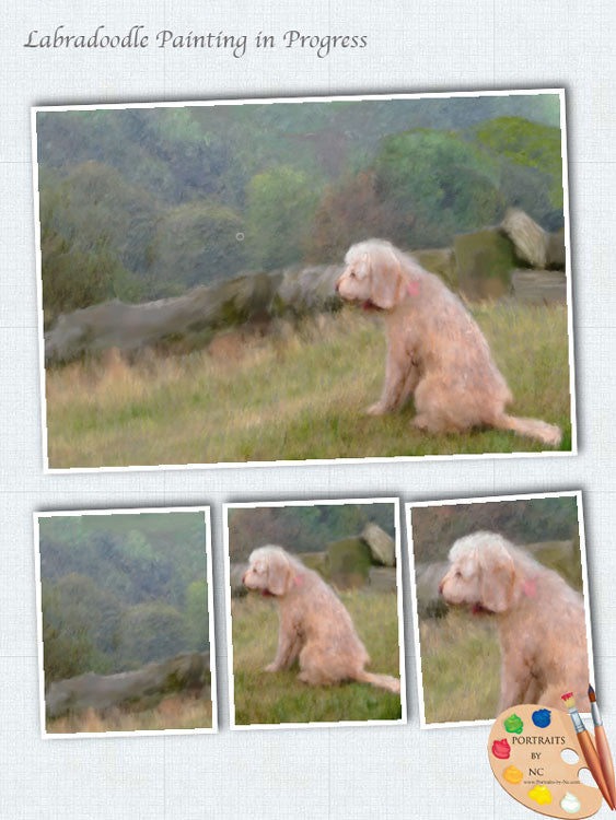 Labradoodle in Field Work in Progress 2