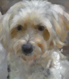 Golden Doodle Custom painted Portrait 667