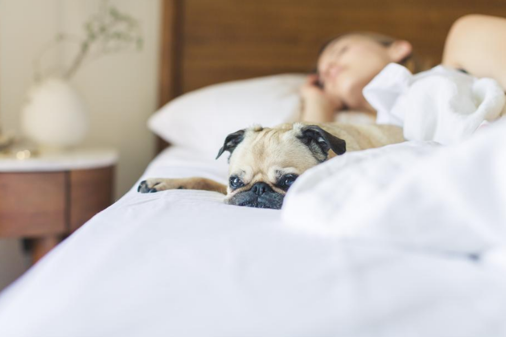 Benefits and Drawbacks with Sharing the Same Bed with your Pet