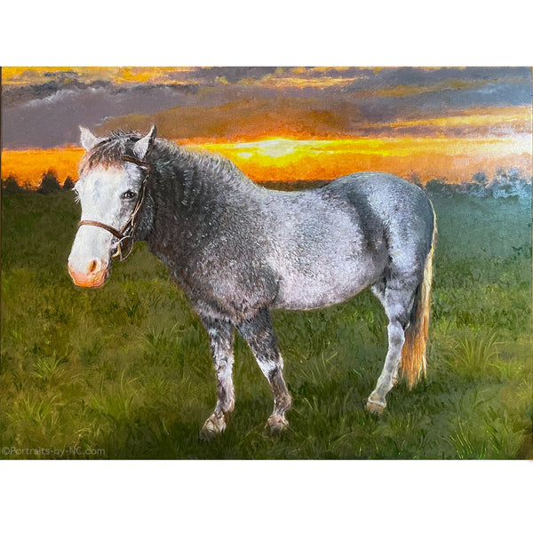 Portrait of a Welch Cross Pony