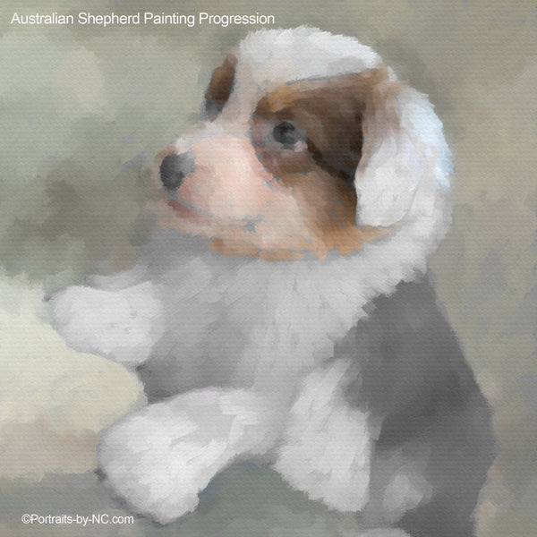 New Australian Shepherd Puppy Portrait - Painting Progression