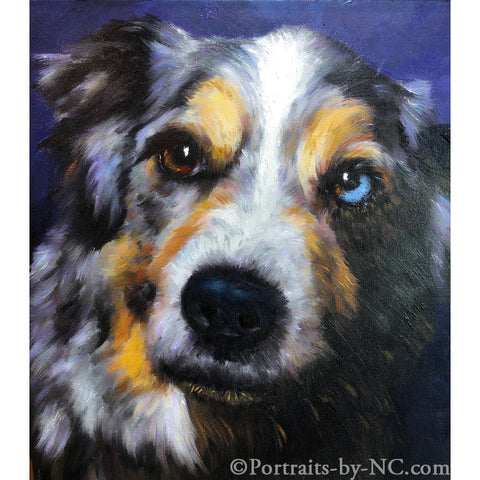 Australian Shepherd Dog Portrait from Photo