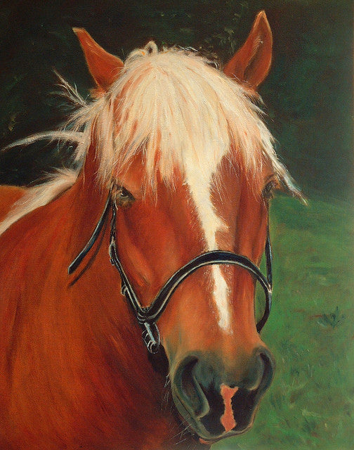 Portrait of a Horse named Cinnamon