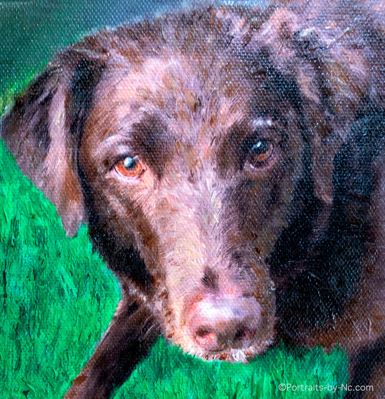 Chocolate Labrador Portrait is Finished