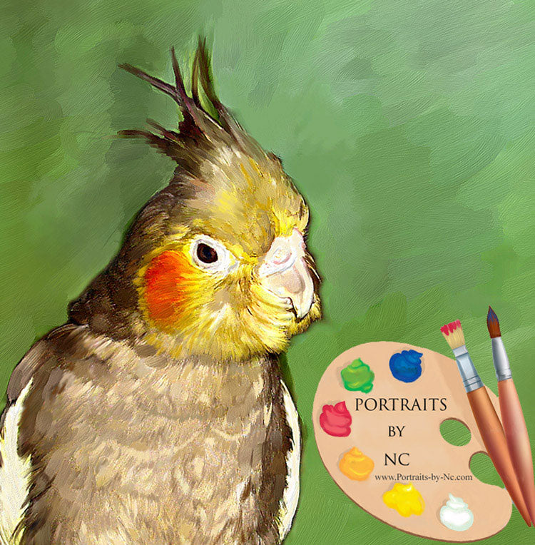 Cockatiel Portrait 534