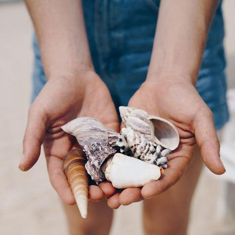 Collecting Sea Shells for Craft Projects