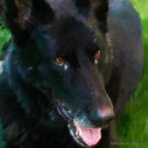 German Shepherd Portrait 701
