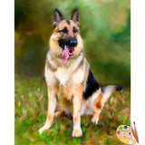 German Shepherd Portrait 641