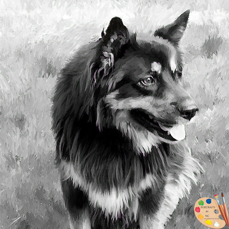 A German Shepherd Portrait in Black and White 513