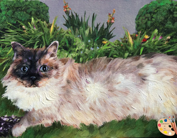 Himalayan Cat Portrait 528