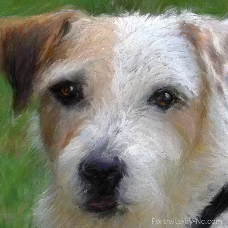 Jack Russel Portrait Review