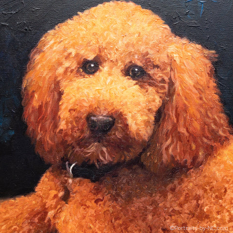 Update on the Standard Poodle Portrait