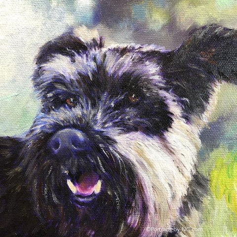 Schnauzer Oil Portrait is Finished
