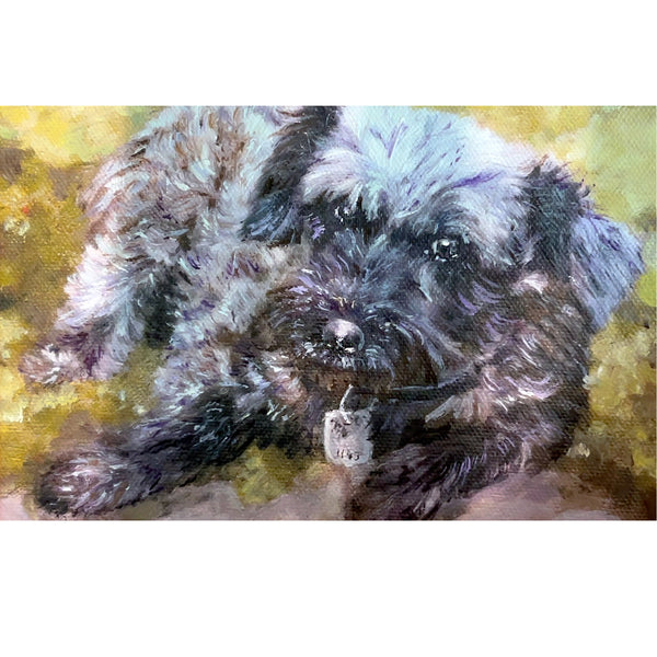Schnauzer Portrait Progression