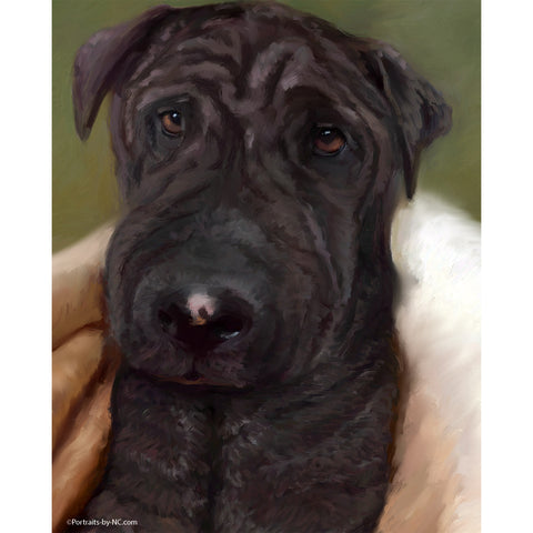 Sharpei Mix Portrait