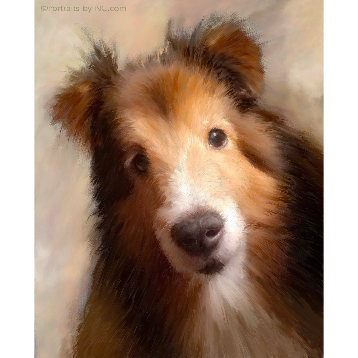 Portrait of a Sheltie 682