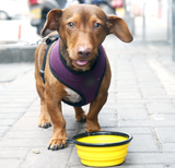 Collapsible Colorful Dog Travel Bowl Set