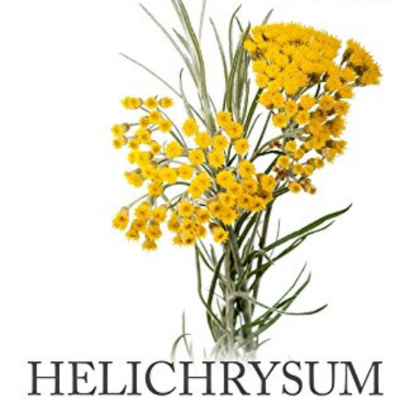 Helichrysum or Strawflowers