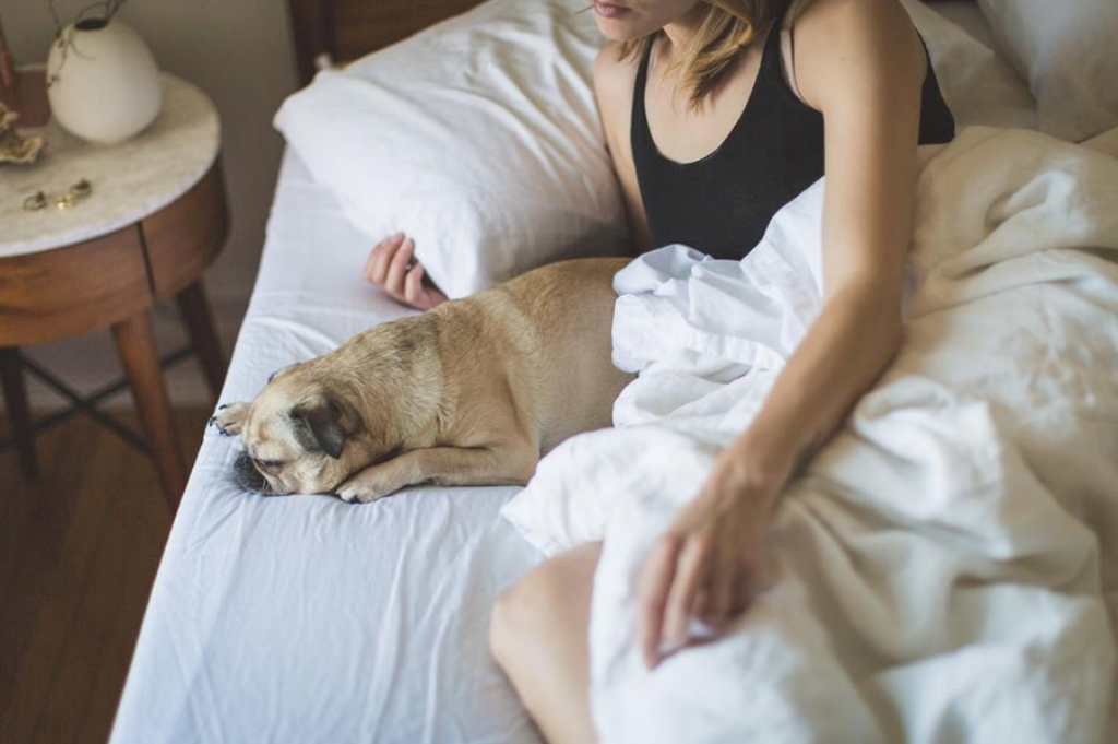 Pet owner with dog in bed