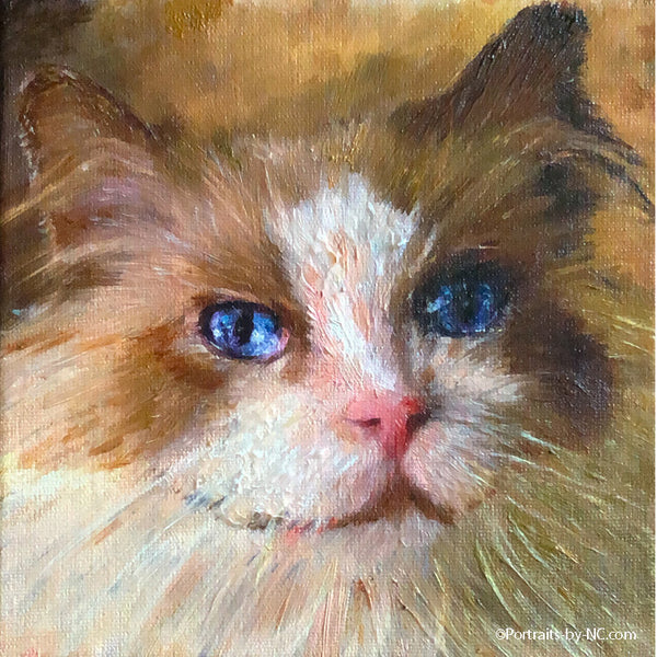Cat portrait in oil