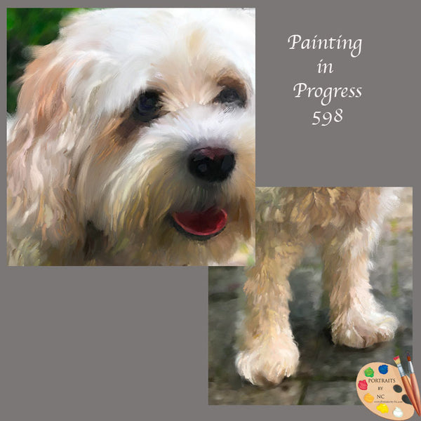 cavachon painting in progress 598
