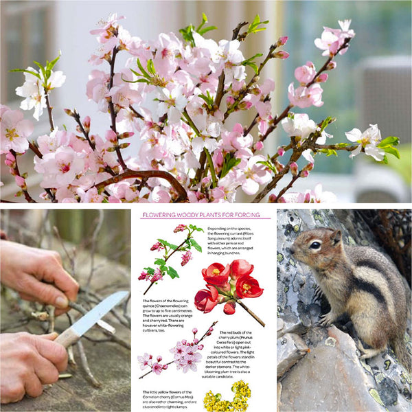 Forcing Flowering Branches