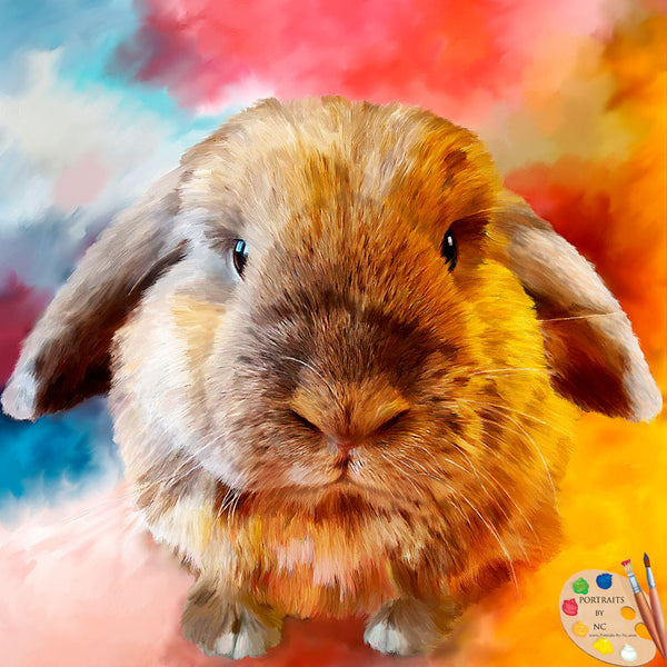 holland lop portrait 601