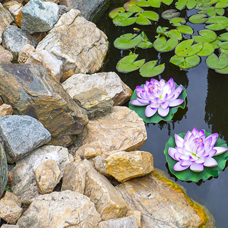 lily flowers in pond