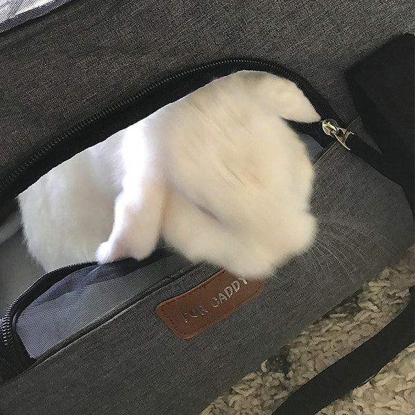 Rabbit in Pet Carrier