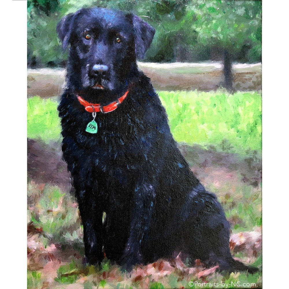 Black Labrador Portrait 691 - Portraits by NC